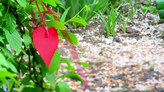 Red heart paper on green grass.Toning. Tilt-shift effect Stock Footage