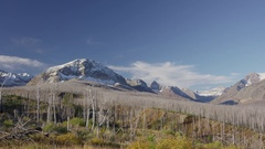 Wide panning shot of barren trees in mountain landscape / Glacier National Park Stock Footage