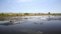 Swarm of mosquitoes fly over swamp polluted water Stock Footage
