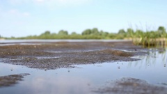 Swarm of mosquitoes fly over swamp contaminated water Stock Footage