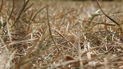 Garden In Summer Drought With Grass Brown And Dying Stock Footage