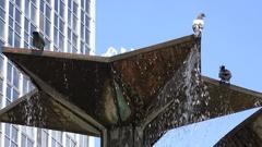 4K Pigeon bird play in fountain water petal flower art Berlin Friendship Nations Stock Footage