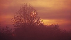 Trees backlit by mystical sunlight  at sunset Stock Footage