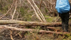 Hiker walking through fallen trees on Overland Track Stock Footage