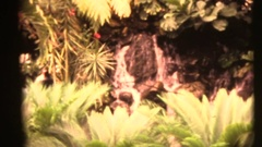 Vintage 8mm home movies, Waterfall in the arboretum Stock Footage