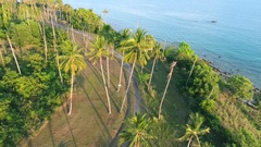 Sunset at coconut Palm Trees Plantation on Phuket Island. Tropical HD aerial Stock Footage
