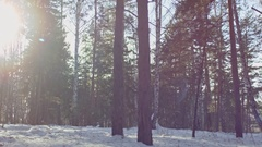 Blissful Scenery of Winter Forest Stock Footage