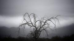 Creepy Old Tree Stock Footage