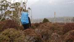 Hiker walking through heath landscape on Overland Track Stock Footage
