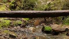 Hiker walking over tree trunk on Overland Track Stock Footage