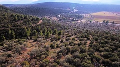 Mediterranean rural scenery olive trees fields landscape aerial forward motion Stock Footage