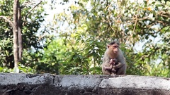 Monkey family in the tropical forest Stock Footage
