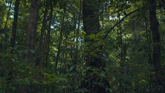 Forest Tree Pan Up Stock Footage