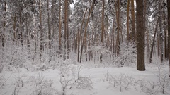 Camera moves in a snowy forest with  lot of pine trees and then rises u Stock Footage