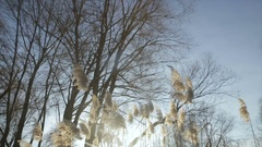The glare of the winter sun through the branches with leaves Stock Footage