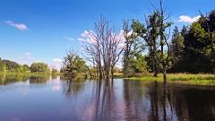 Beautiful landscape lake green grass trees swamp aerial skyline horizon blue sky Stock Footage