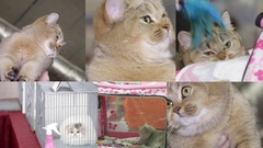Collage of cats on the cat show Stock Footage