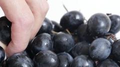 Tacking with hand European Vitis vinifera grape food background slow tilt Stock Footage