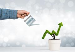 Concept of investment income and growth with tree in pot Kuvituskuvat