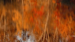 Fall color reflections on pond, E United States Stock Footage