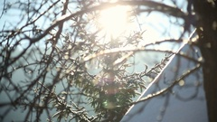 Sun shine through tree branches covered with snow. Arkistovideo
