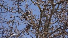 4K Wild couple pigeon perched on tree branch natural bird habitat birdwatching Stock Footage