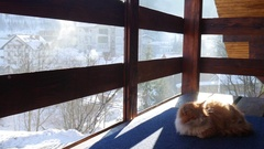 Nice red cat sitting outdoor in winter Stock Footage