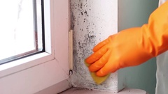 Black mold growth in building. Mold Removal Stock Footage