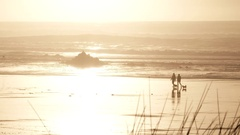 Little Dog Couple Walk Sunny Beach Shore Stock Footage