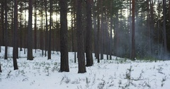 Cold winter evening in pine forest with smoke dolly movement slow motion Stock Footage