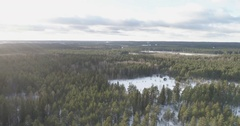 Aerial descent flight over winter pine forest in daylight Stock Footage