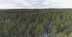 Aerial forward flight over winter pine forest in daylight Stock Footage