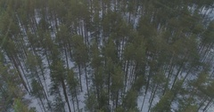 Aerial forward flight looking down over winter pine forest in daylight Stock Footage