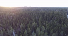 Aerial side flight over winter fir forest in sunset Stock Footage