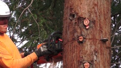 California Redwood tree removal, chainsaw sections Stock Footage