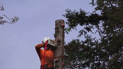 California Redwood tree removal, cutting from top down Stock Footage