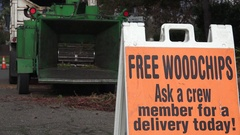 California Redwood tree removal, cutting cost Stock Footage