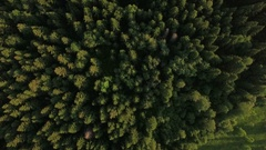 Flying over green forest and village near the road, Russia Stock Footage