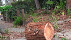 California Redwood tree removal, big logs for the chipper Stock Footage