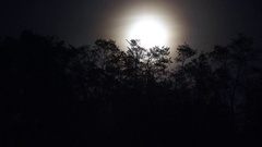 4K Amazing full moon among empty tree branch by night natural satellite bright Stock Footage