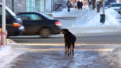 Stray dog on a city street Stock Footage