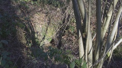 English Countryside near London. Early spring beech wood. Copy space background Stock Footage