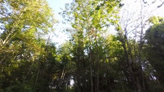 Trees, Forest, Real Time Stock Footage