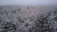 Aerial mixed forest on foggy winter day Stock Footage