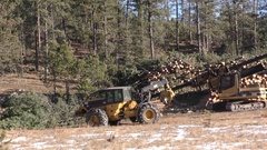 Logging Tree Harvesting Pine Timber in Black Hills National Forest Stock Footage