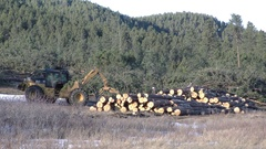 Timber Harvesting Logging Machine Stacking Logs in Forest Stock Footage