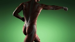 Human muscular system scan Stock Footage