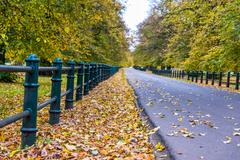 Road with autumn trees with yellow and orange foliage Stock Photos