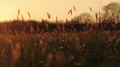 Organic Revealed As The Camera Pans Left. Filmed in a picture perfect meadow at Stock Footage