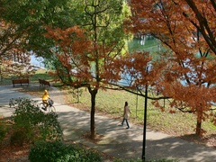 Urban Park In Fall Season Hiroshima Japan With Autumn Foliage Stock Footage